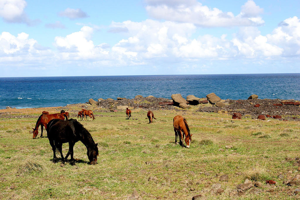 Horses and toppled moai at Akahanga