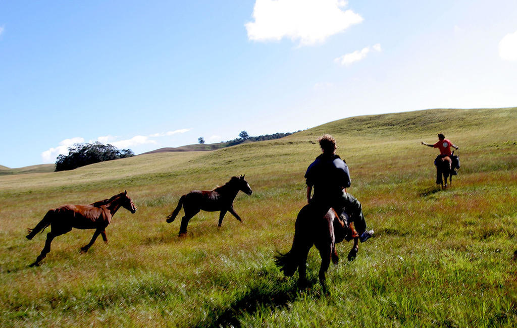 "Running with ""wild"" horses"