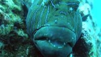 Video: Reef Critters