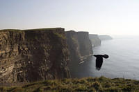 Photobombing bird, Cliffs of Moher