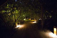 Lighted path and natural vegetation
