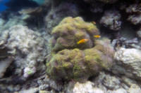 Clownfish with a fogged camera
