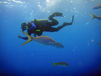 Diver and yellowtail