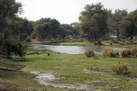Lower Zambezi tributary