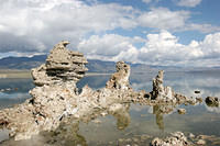 "Lake Mono is the ""avian gas station"" for migratory birds"