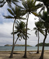 Palm trees at Pont Pierre beach